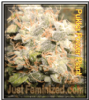 Power Plant Feminized Mix & Match Seeds